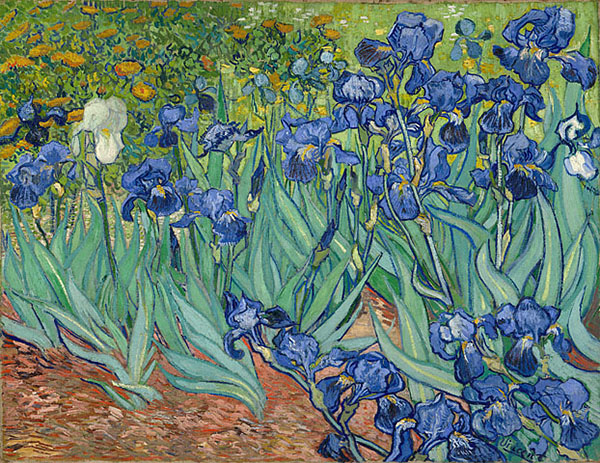 Irises, Vincent Van Gogh, J. Paul Getty Museum