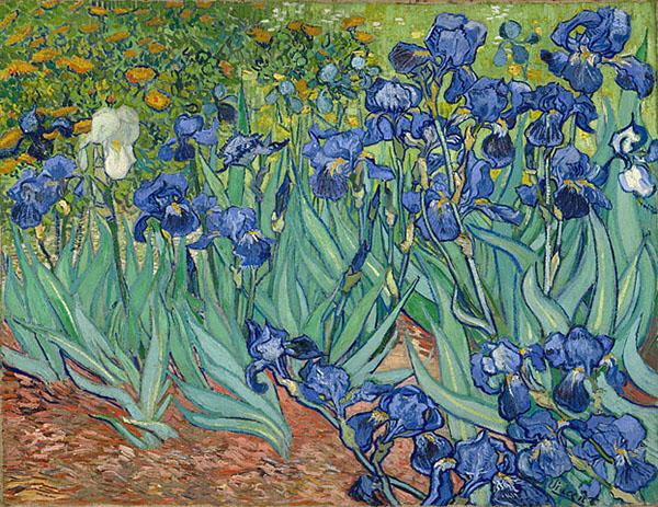 Irises, Vincent Van Gogh, J. Paul Getty Museum