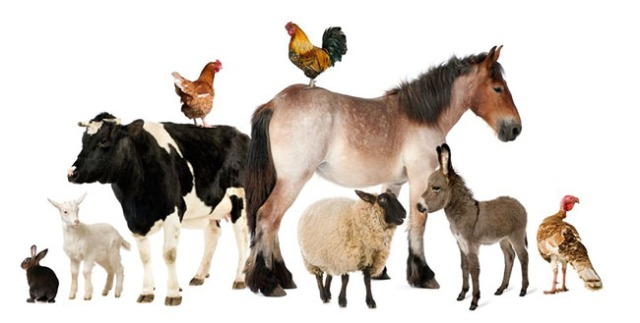 FarmAnimals